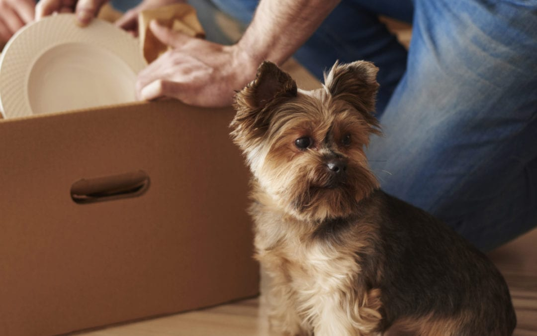 Tips for Moving with Pets!